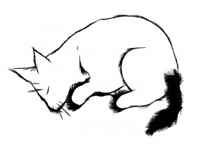 aug-29-snoozing-cat.jpg