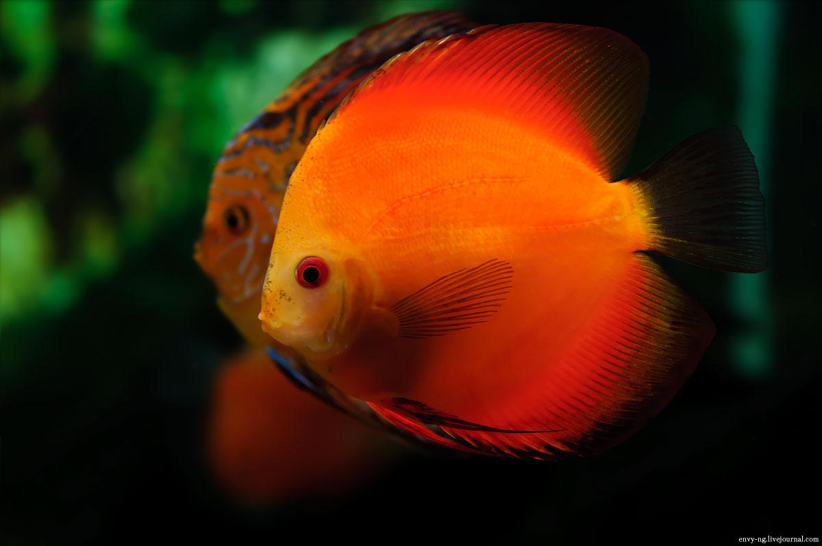 ryby_002