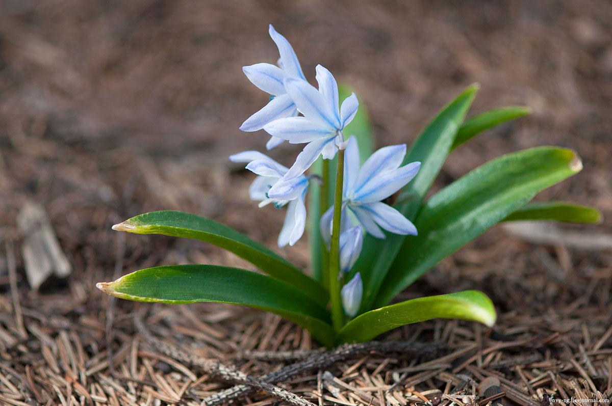 его словам, что такое цветок пушкиния фото знакомство райан назовет