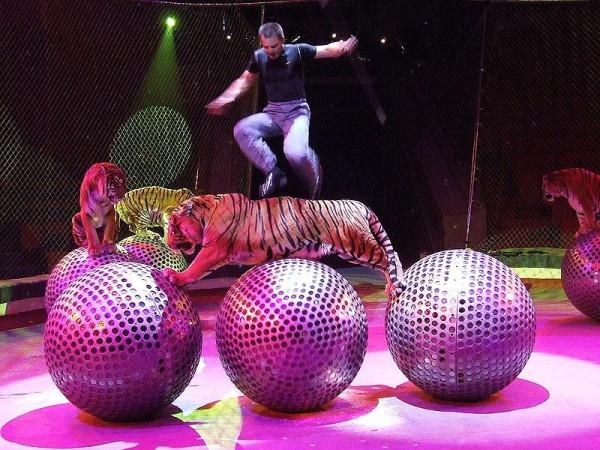 Цирковая феерия