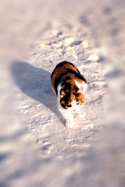 на-снегу1