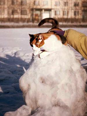 на-снежном-коме