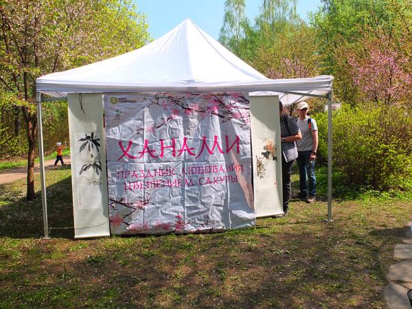 Ханами Праздник любования цветением сакуры