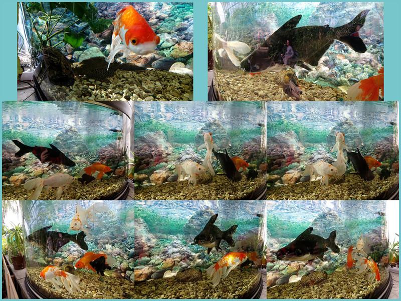 РыбкиВсе