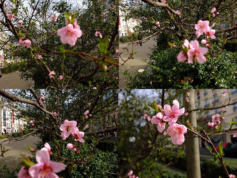 цветы11032017