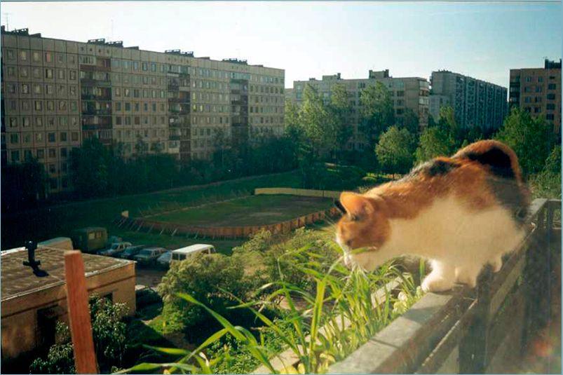 смотрит-вниз-с-балкона