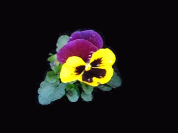 Цветы на набережной канала Грибоедова Fy