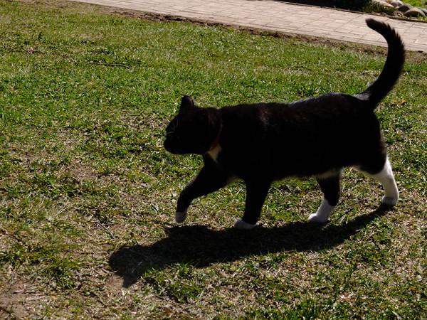 Сегодня День Петербургских котов, говорят.