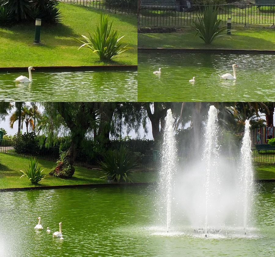Лебеди-