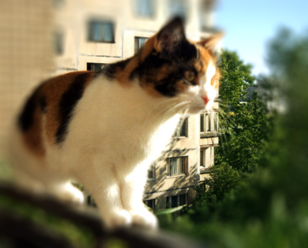на-балконе