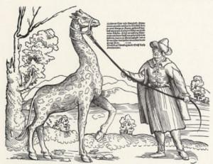 Niklas Sturgeon - Giraffe