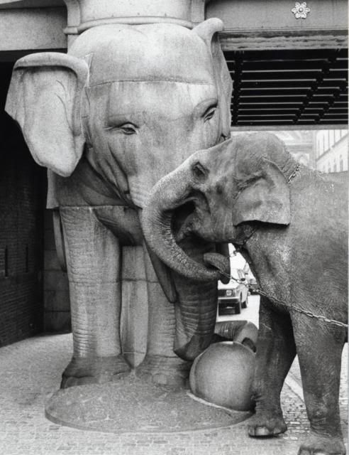 """Живой эмблемой """"Карлсберга"""" в свое время был слон из Таиланда"""