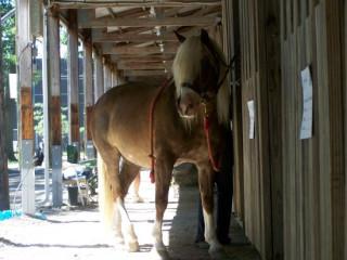 horse63430.jpg