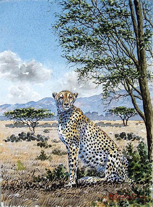 Cheetah-on-the-Savannah