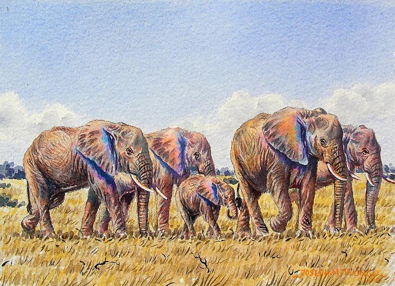 elephants-walking