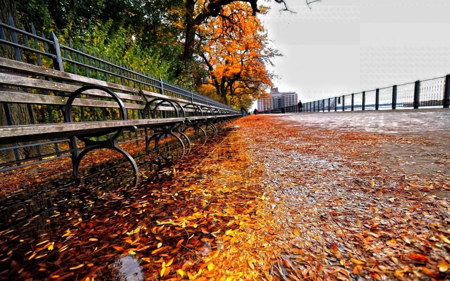 autumn-370370_1.jpg
