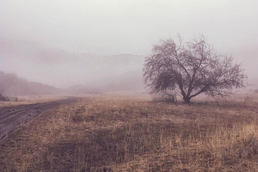 fog-2407344_1920_1.jpg