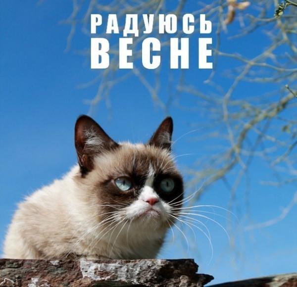 Grumpy-Cat-весна-1113613