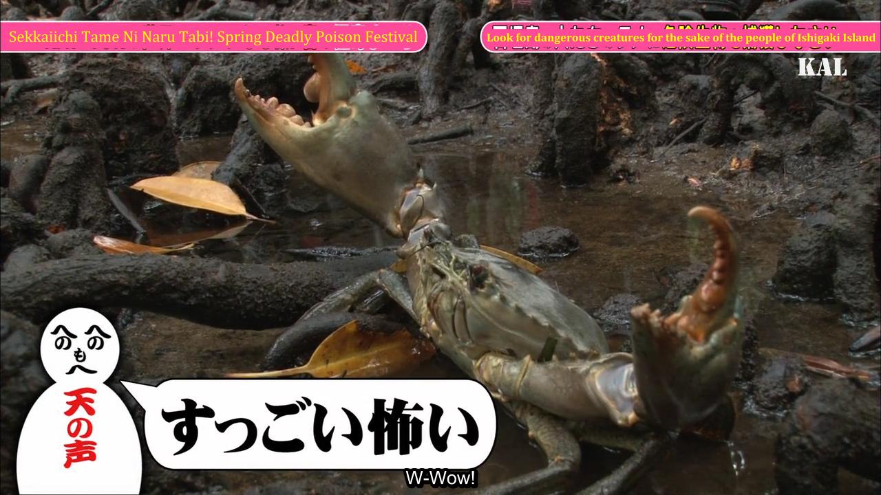 [TV] 20150417 Tame Tabi Episode 1 - 60m SP in Ishigaki (44m59s)(1280X720)(KAL)_001_33981.png