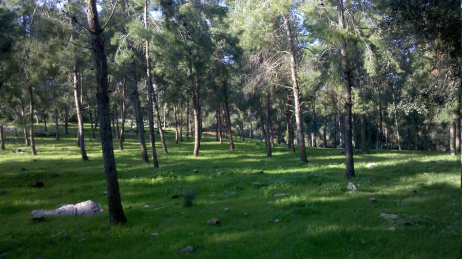 2012-12-15_08-42-36_933_Rekhasim