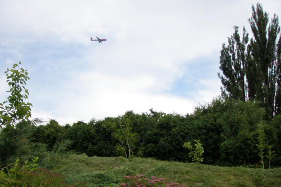 кировский лес навальный
