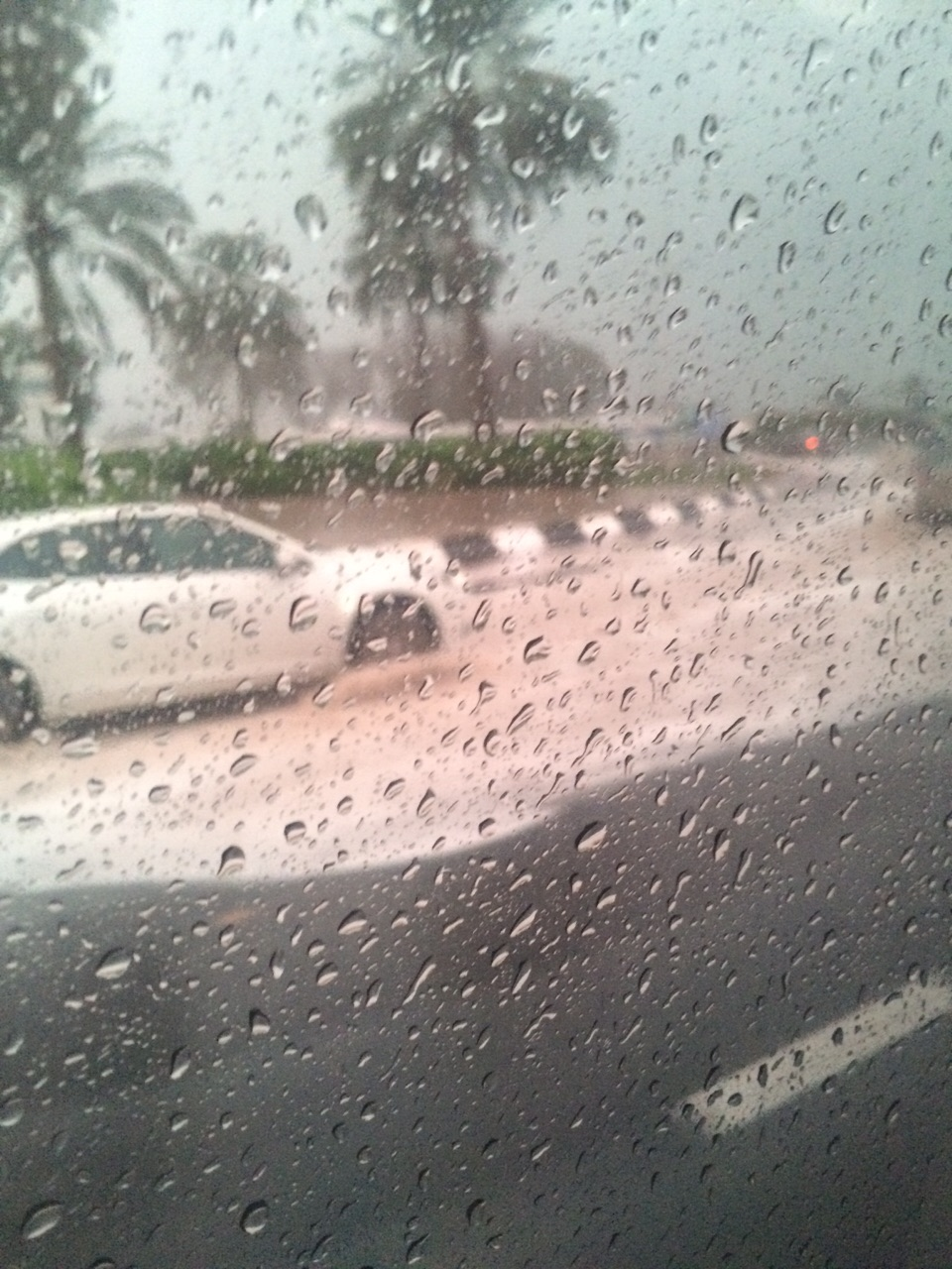 26 ноября. Опять пальмы и дождь