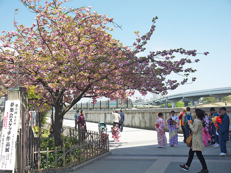 Токио, Асакуза, сакура