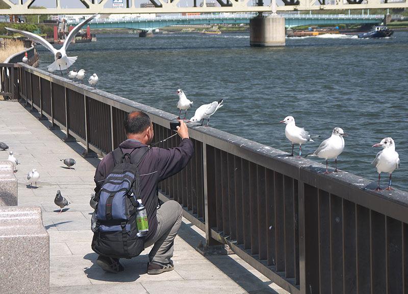 Токио, Асакуза, чайки