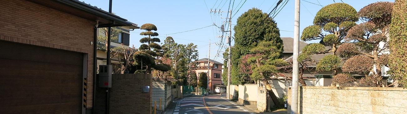 япония, деревня бонсай Омия, омия, бонсай, деревня