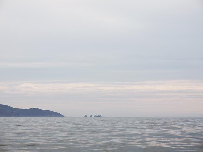 остров Путятина, приморье, тюлени, ларги