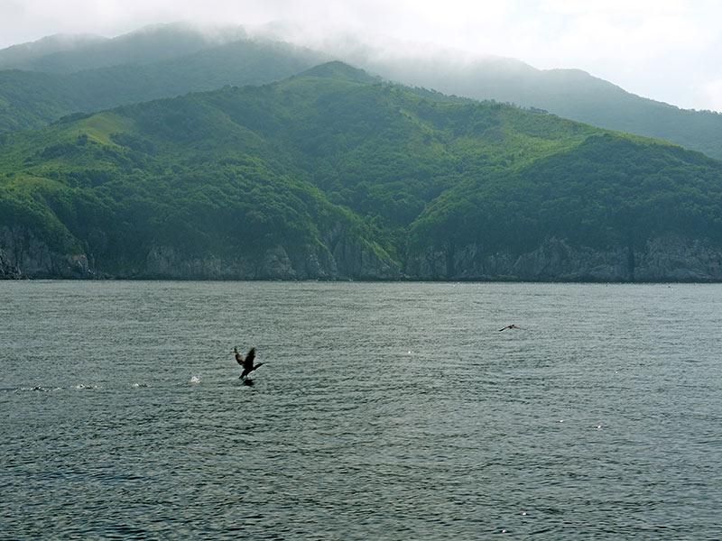 владивосток, приморье, бухта витязь, берег, птичий базар