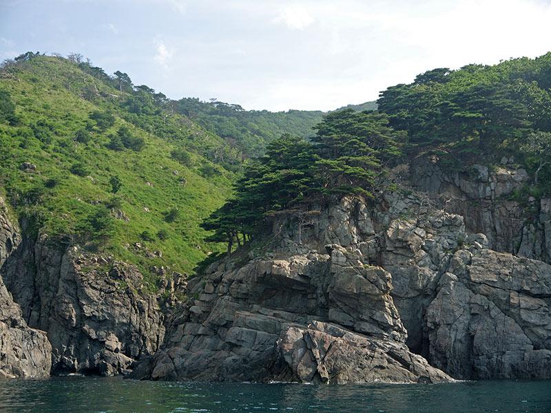 владивосток, приморье, бухта витязь, берег, побережье, могибльные сосны, скала