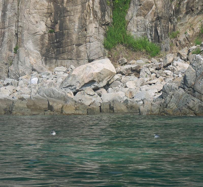 владивосток, приморье, бухта витязь, берег, тюлени, ларги