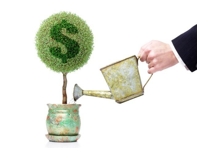Finance_Wallpapers_Money_Tree_015905_29