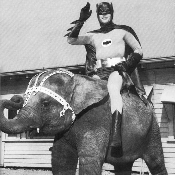 batman-on-elephant