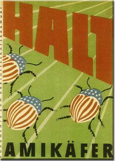 Halt-Amikäfer