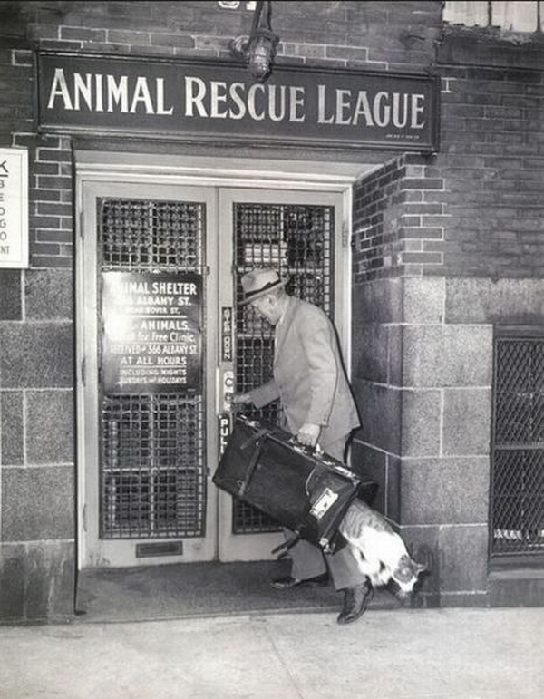 Animal-rescue-league