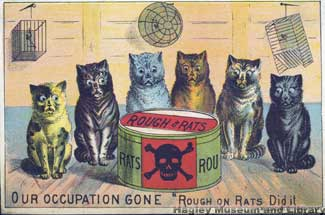 roughonratscats