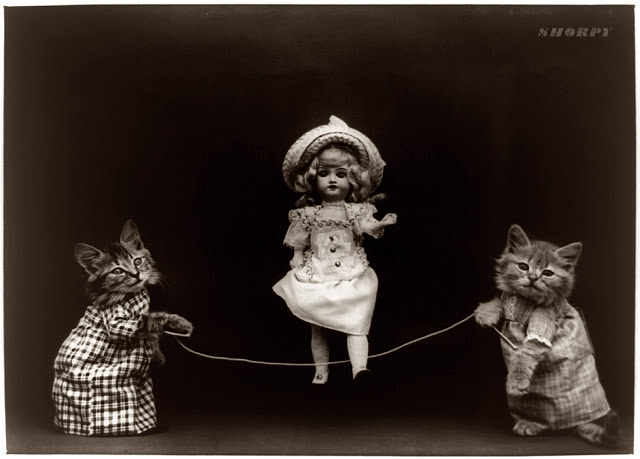Creepy Cat Portraits in The Early 1900's (1)