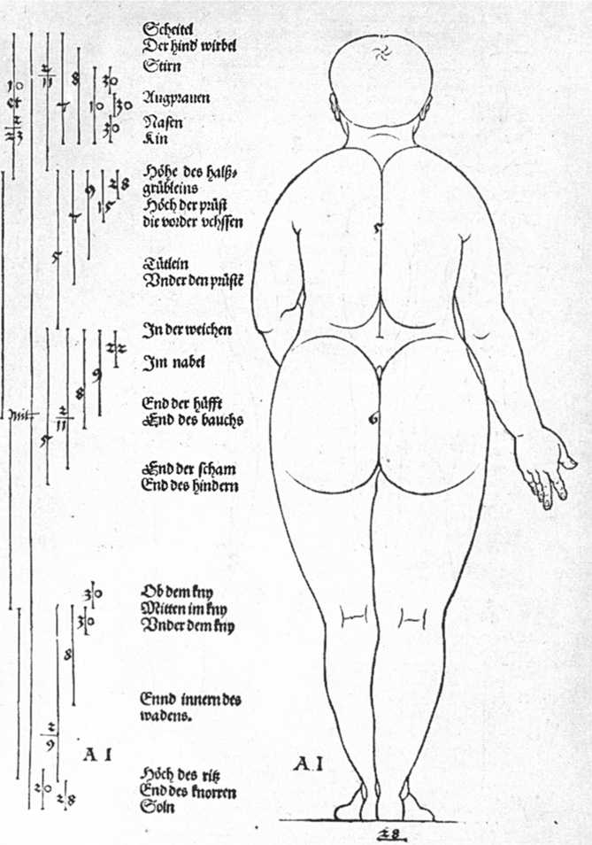 Studies-on-the-proportions-of-the-female-body-2