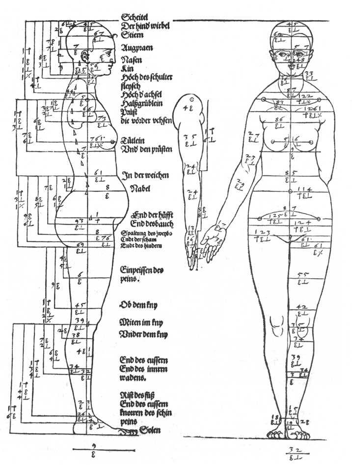 Studies-on-the-proportions-of-the-female-body-1