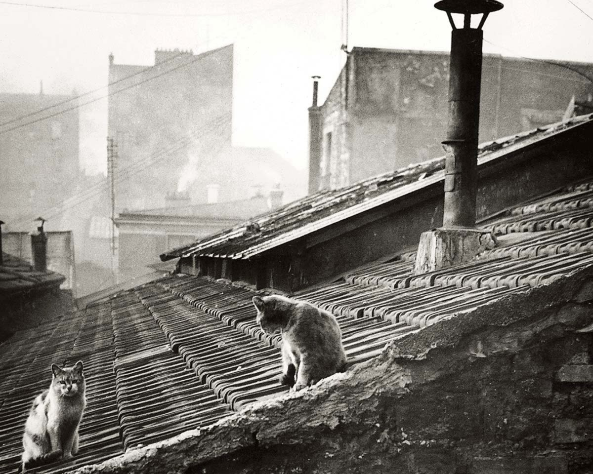 Cats on a roof in Paris. 1947. Photo- Edouard Boubat