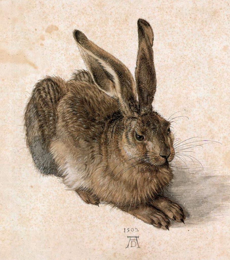 """""""Молодой заяц"""". Альбрехт Дюрер, 1502 г."""
