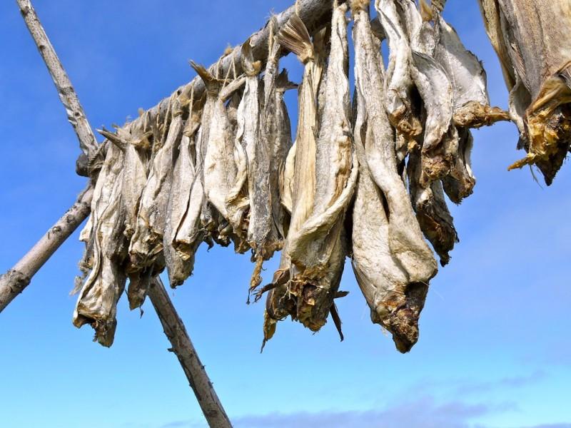 Так сушат рыбу в Исландии