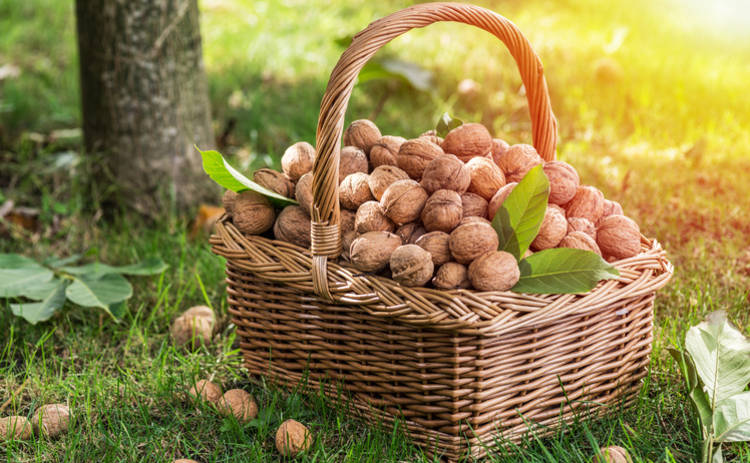 Ореховый Спас