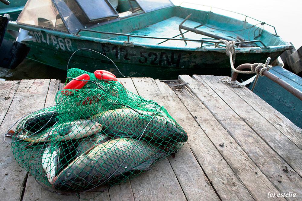 Астраханская рыбалка. Какую рыбу мы ловили
