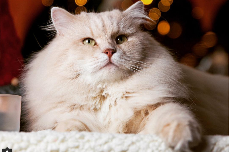 Милая подборка новогодних котиков