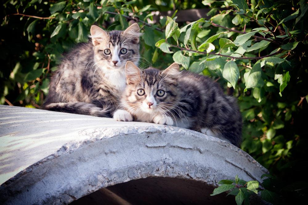 Котики правят миром. Восемью сотками уж точно :-)