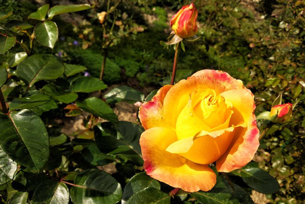Чудесные осенние цветы по понедельникам
