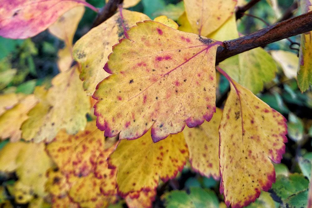 Краски середины осени
